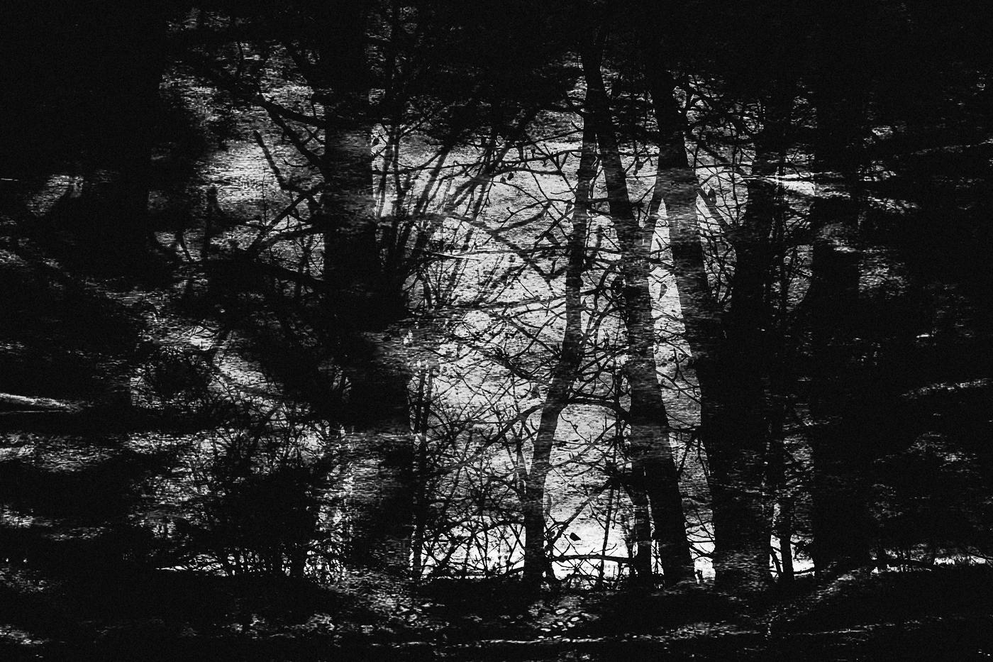 hb images - woods b-w - 8