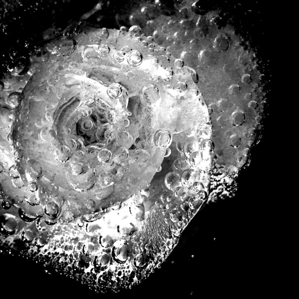hb images - b-w rose and bubbles - 3