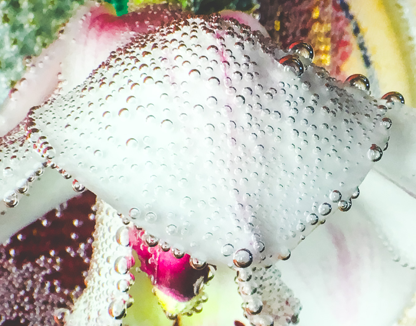 hedy bach images - flowers and bubbles - 4