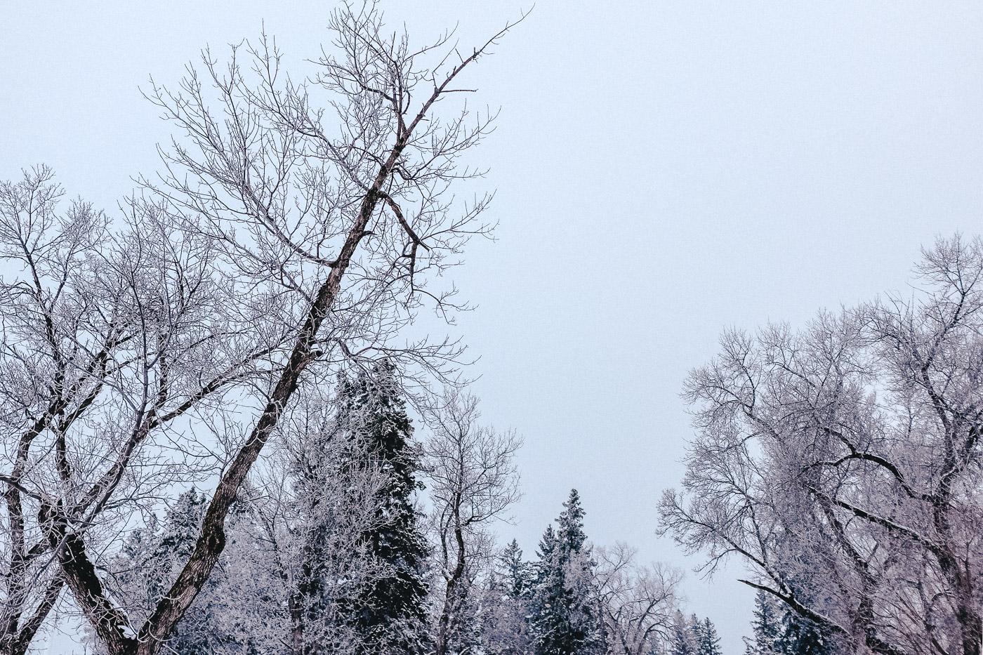 hb images - fog morning - 9