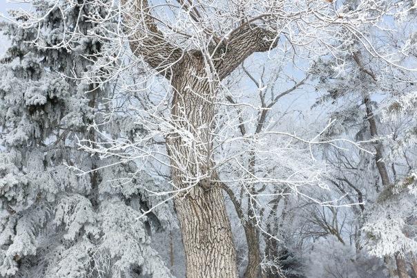 hb images - Regina frost - 3