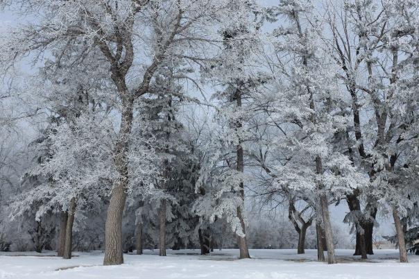 hb images - Regina frost - 4