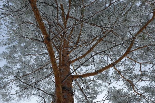 hb images - Regina frost - 5