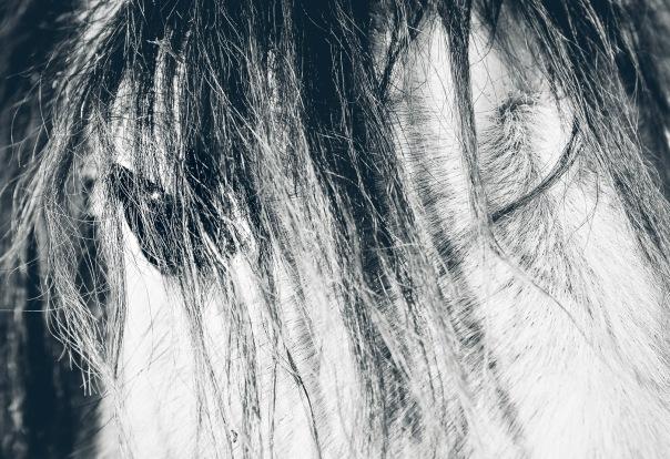 hb images - winter horse - 4.jpg