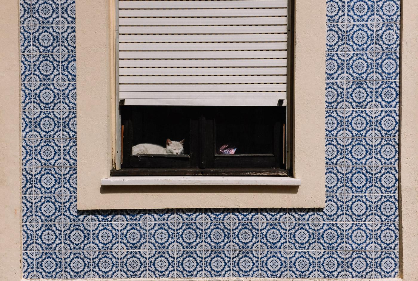 hb images - Aveiro - cat in window_