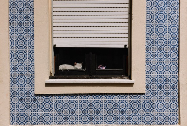 hb images - Aveiro - cat in window_