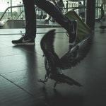 hb images – pigeon –3i