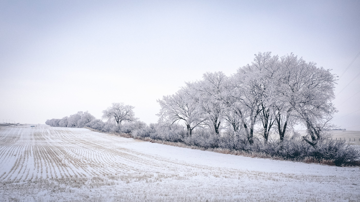 hb images - sask frost - 4