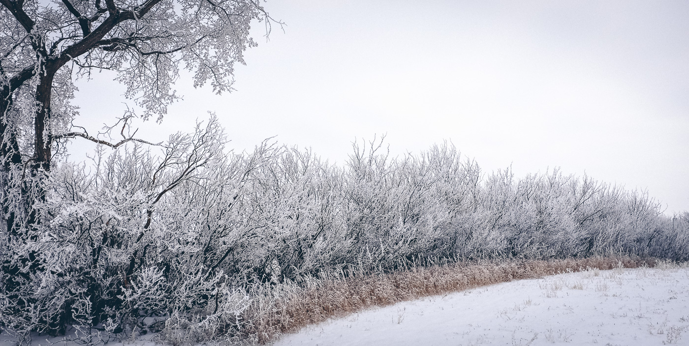 hb images - sask frost - 5