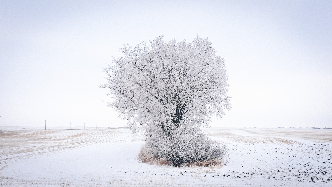 hb images - sask frost - 9