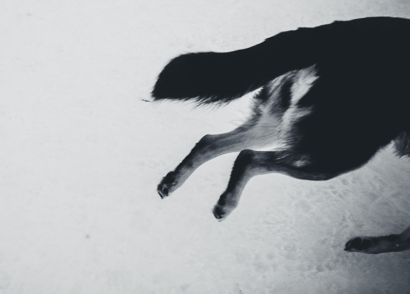 hedy bach images - dog 10