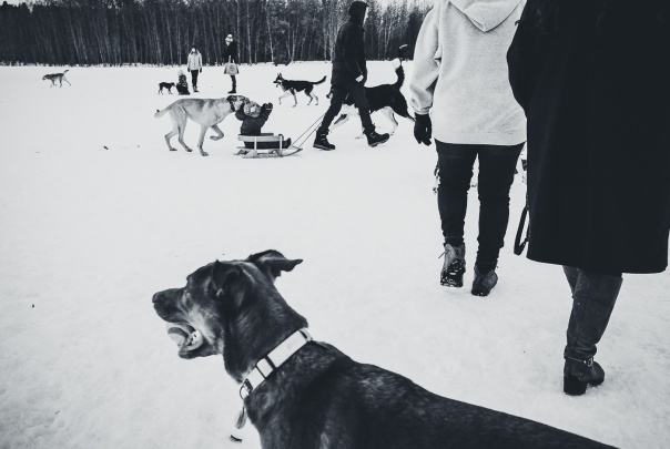 hedy bach images - dog 14