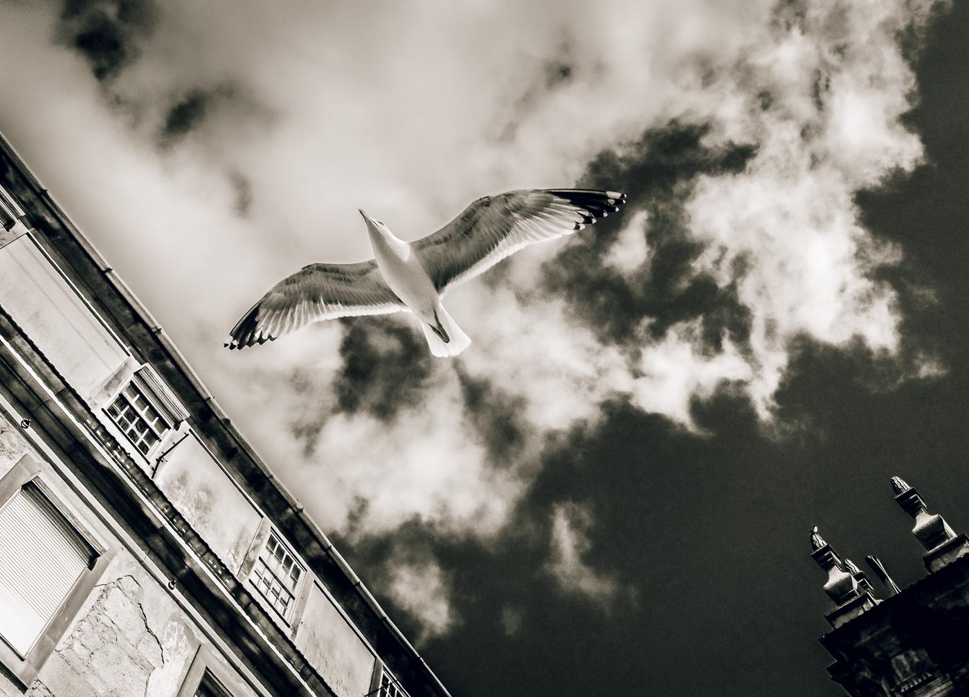 hedy bach images - Porto - b-w mem - 7