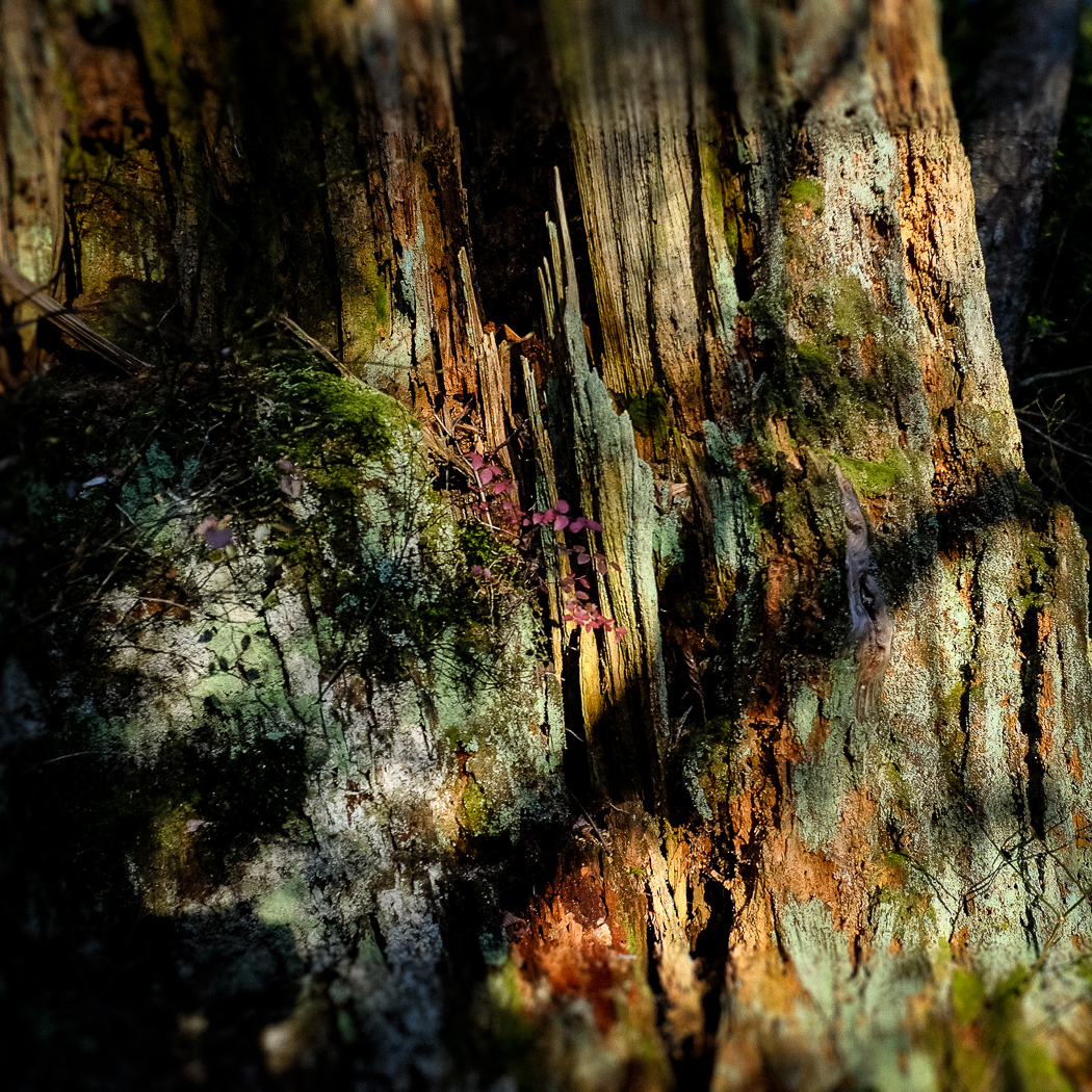 hedy bach images - forest - 1_