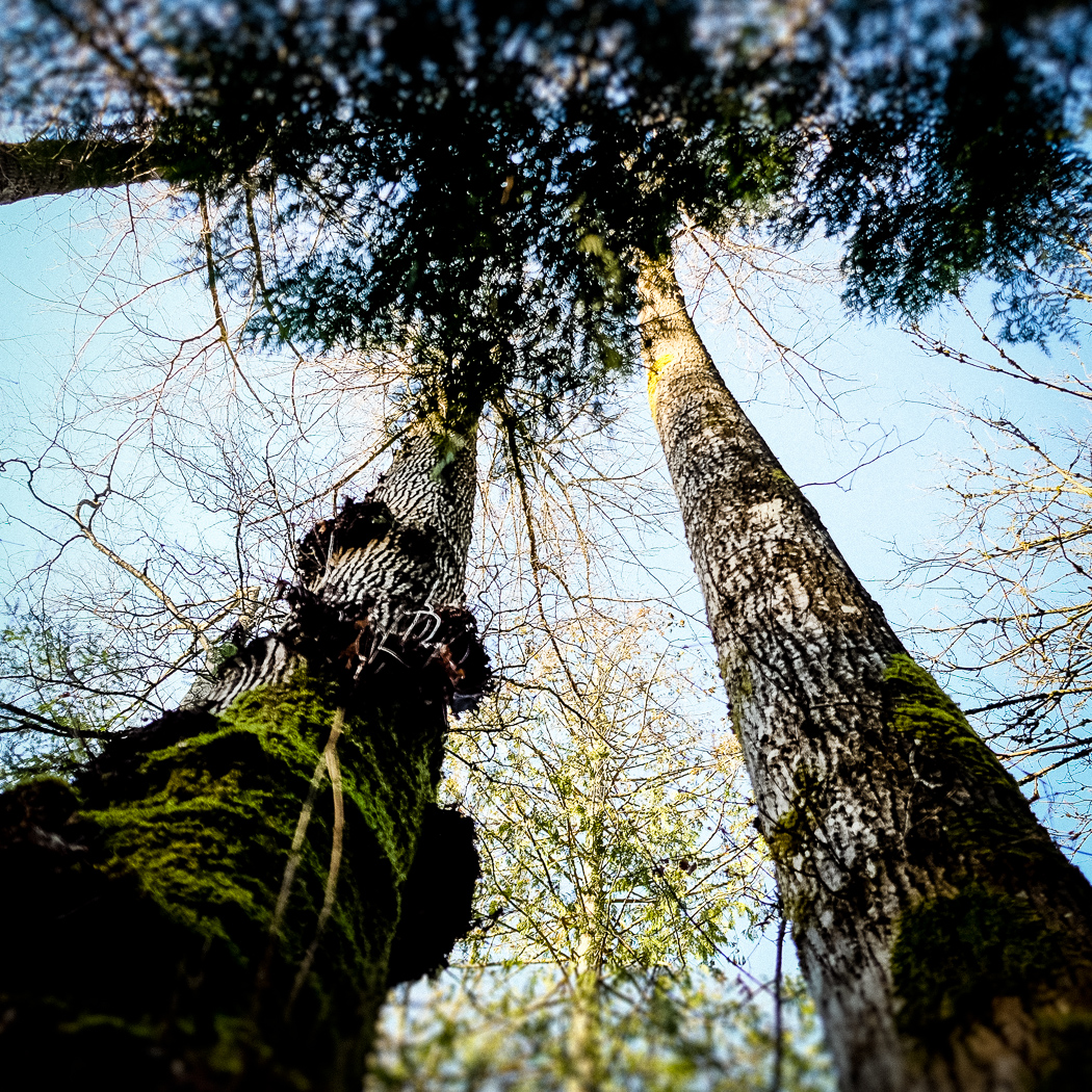 hedy bach images - forest - 2