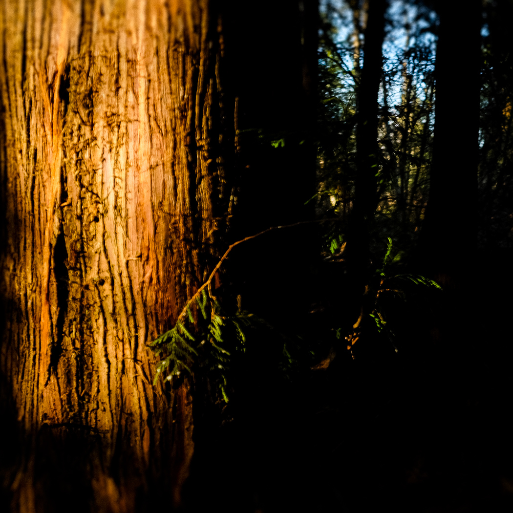 hedy bach images - forest - 3