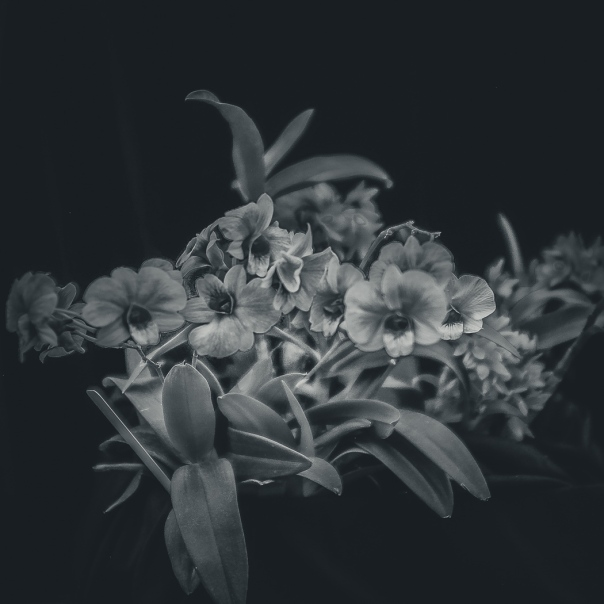 hedy bach images - orchid - 1_