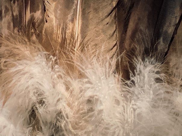 hedy bach images - bird feather - 2