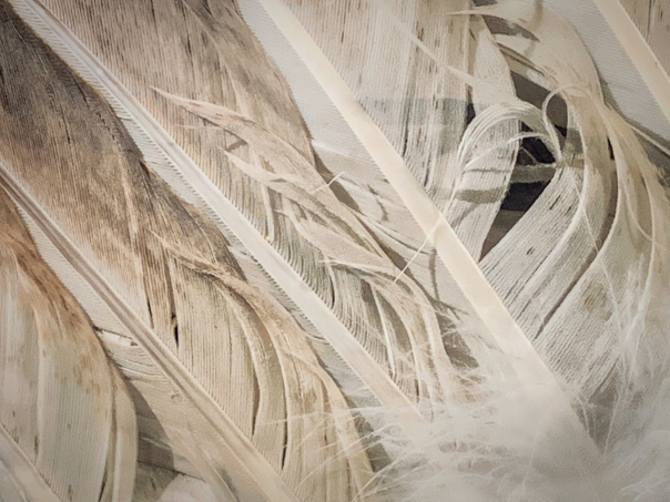 hedy bach images - bird feather - 3