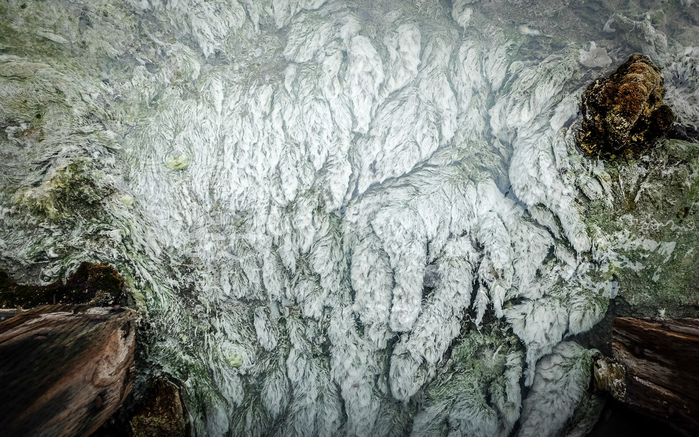 hedy bach images - Cave and Basin 4