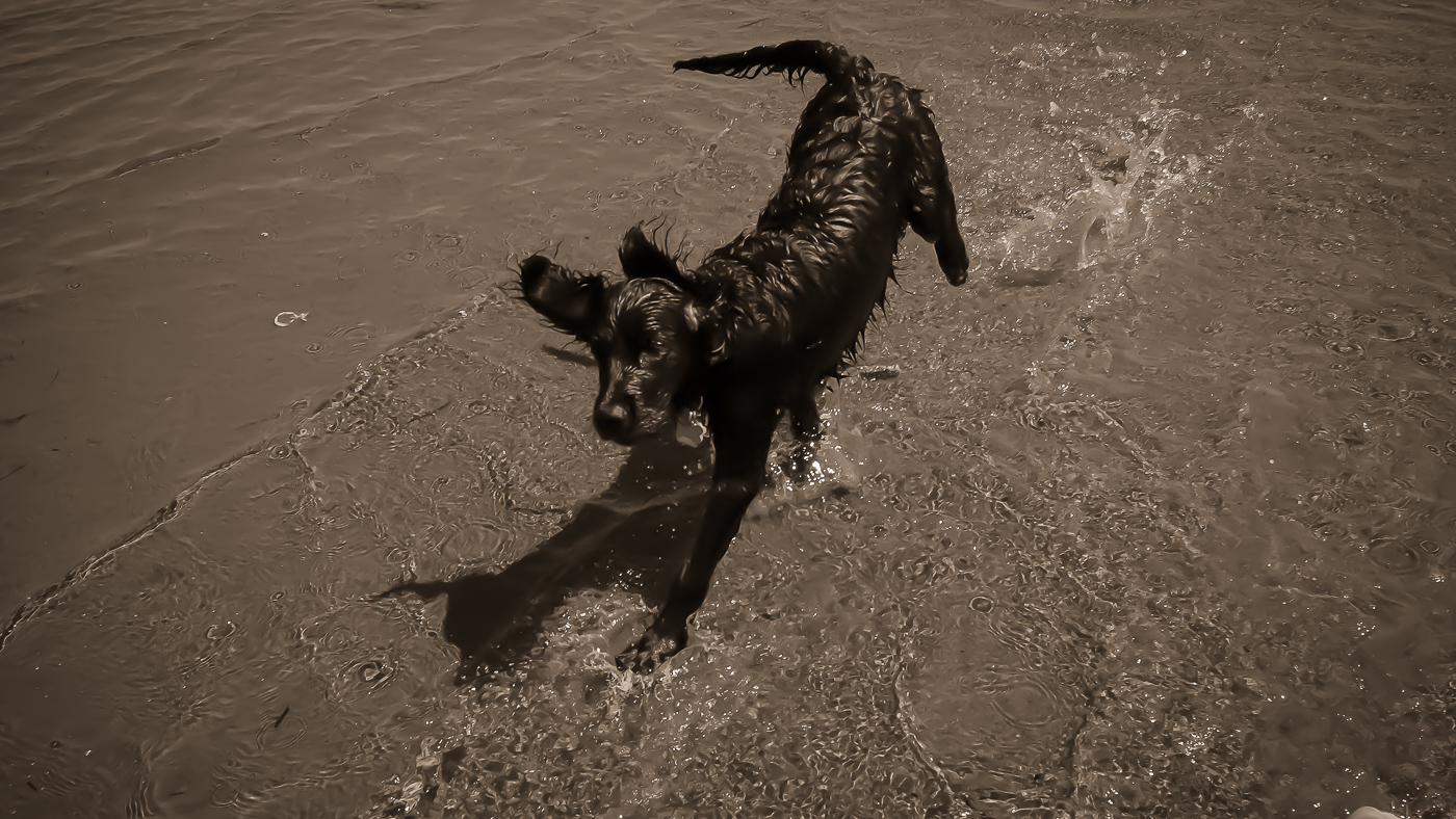 hedy bach images - beach b-w - 11