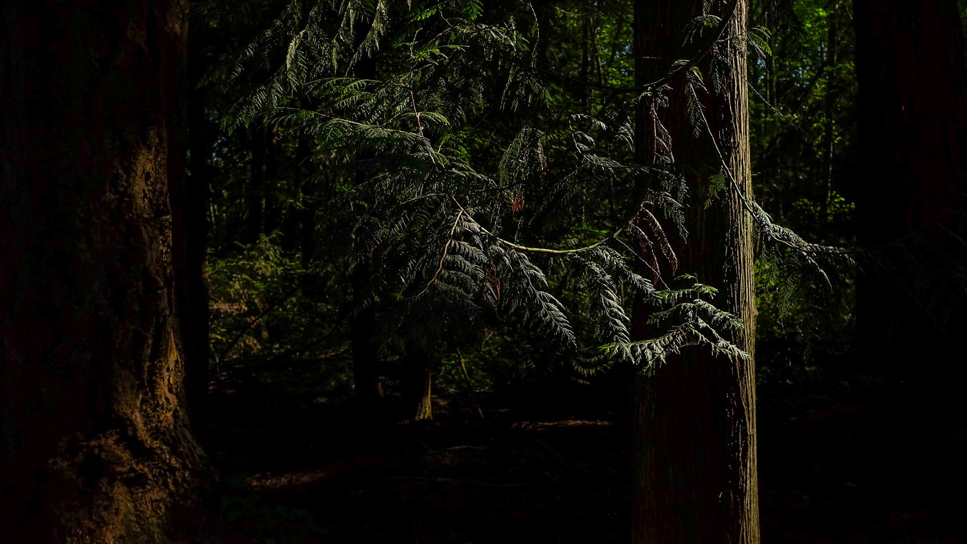 hedy bach images - forest - 1