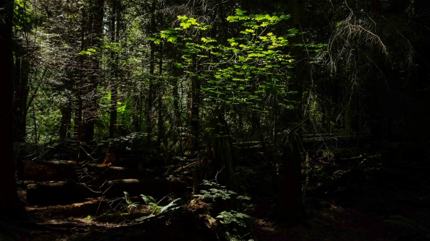 hedy bach images - forest - 2-2