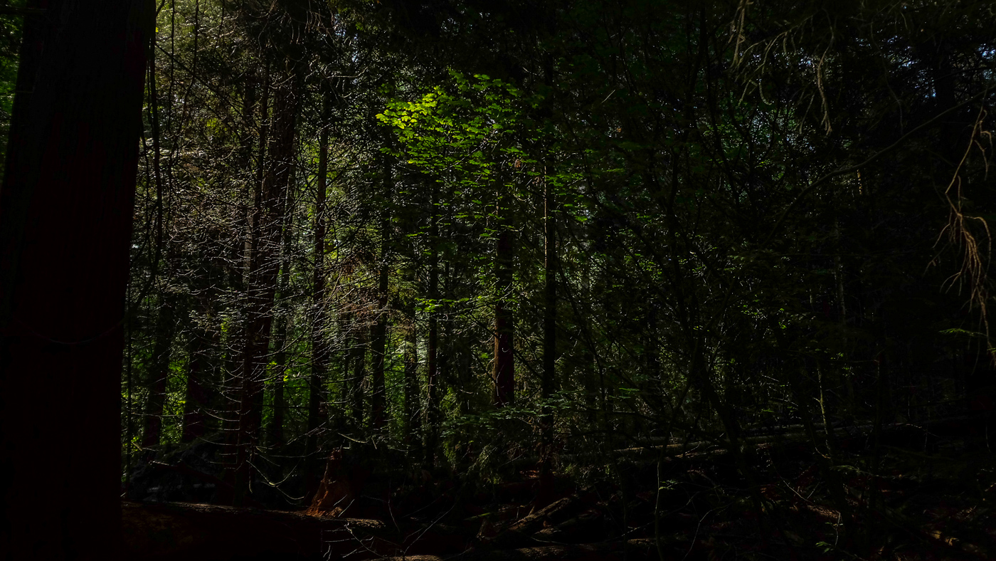 hedy bach images - forest - 4-2