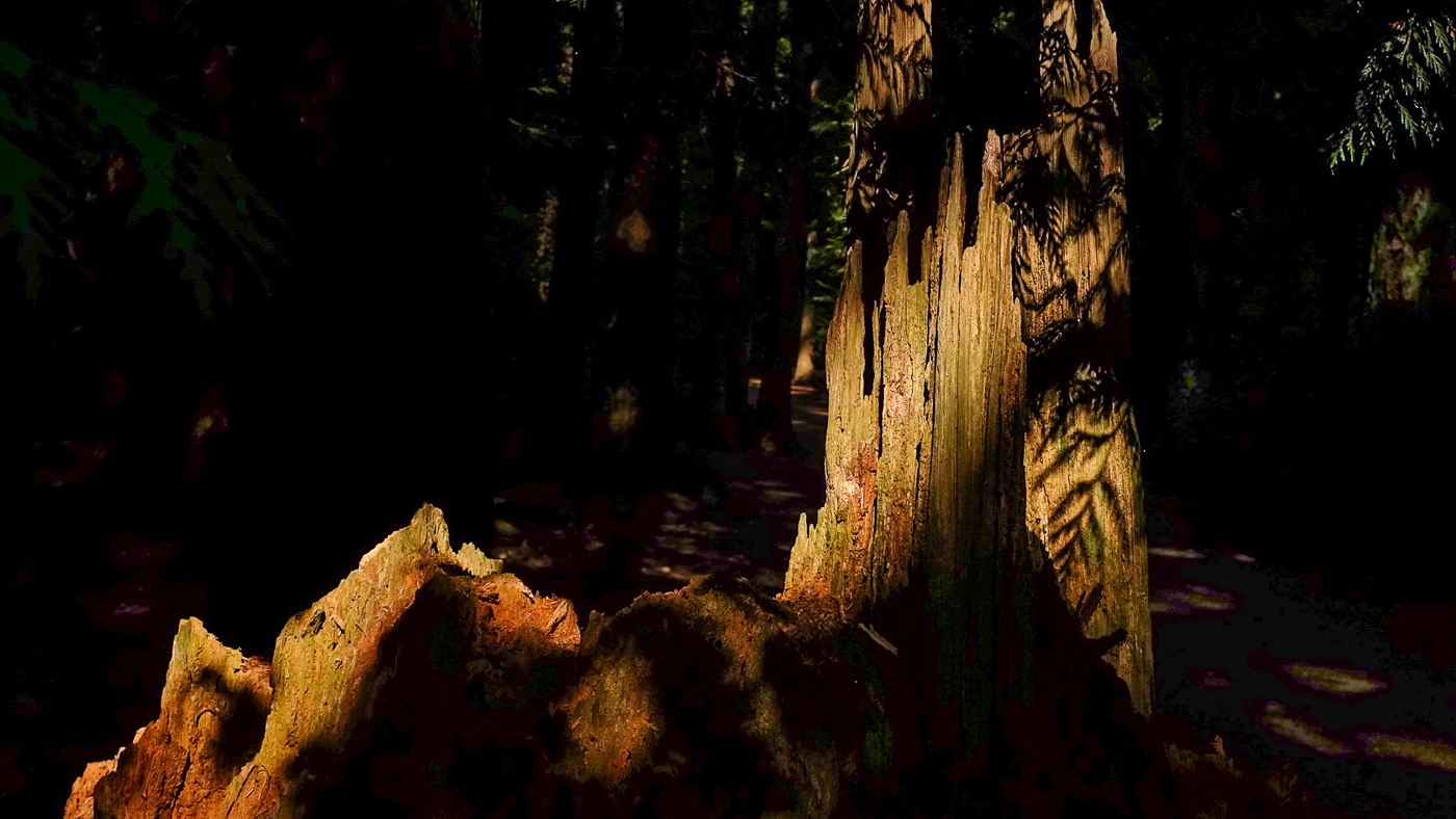 hedy bach images - forest - 5