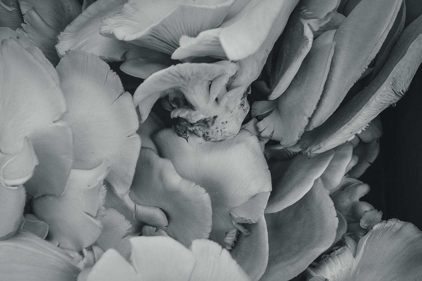 hedy bach images - mushroom - 1_