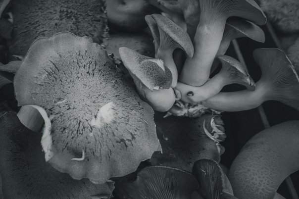 hedy bach images - mushroom - 5