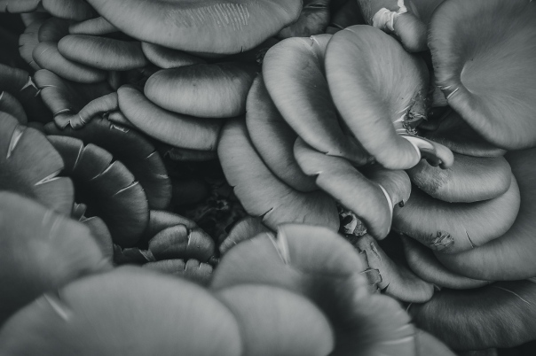 hedy bach images - mushroom - 6
