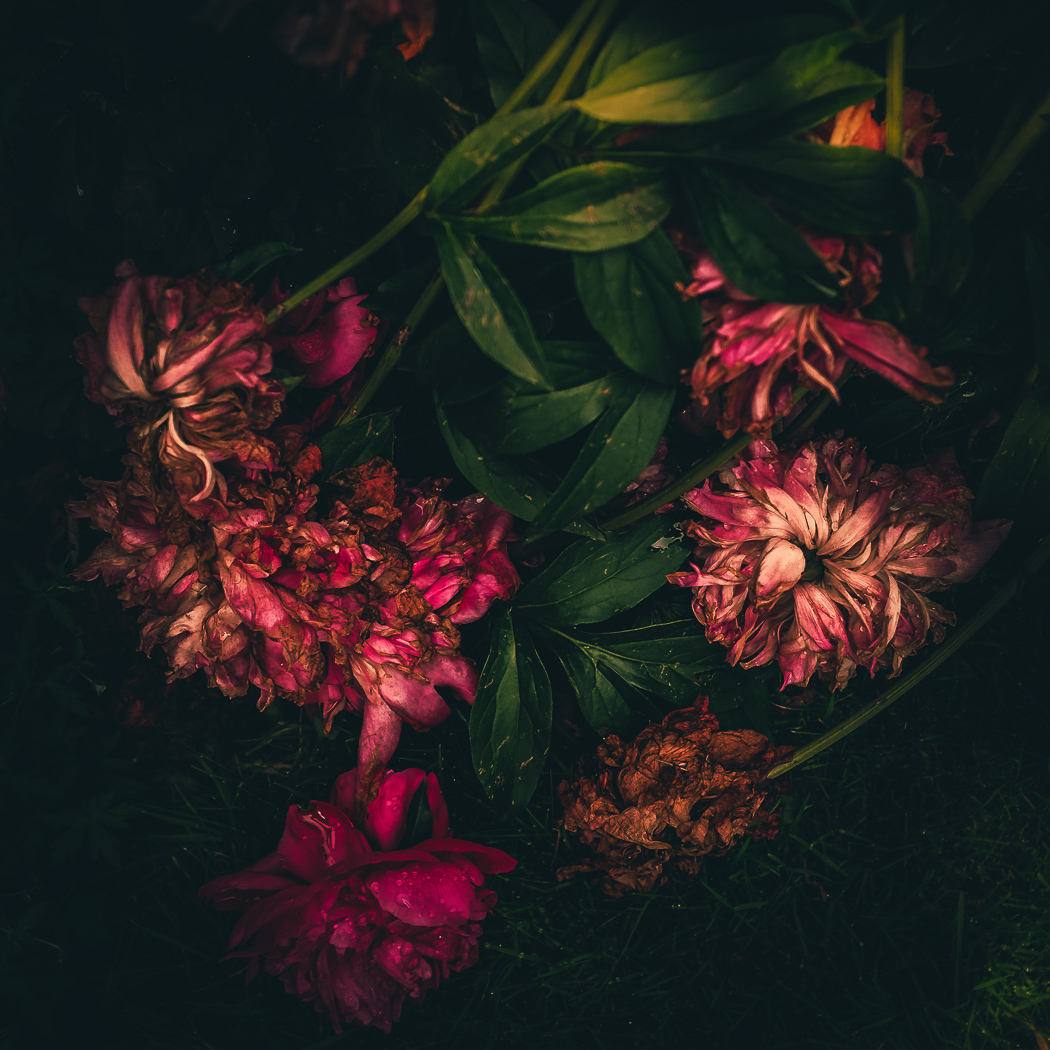 hedy bach images - flowers dying - 1