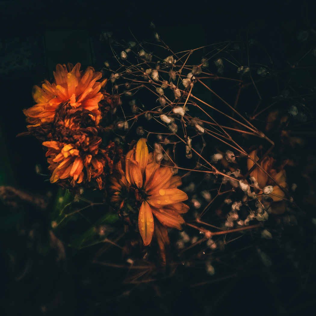 hedy bach images - flowers dying - 8