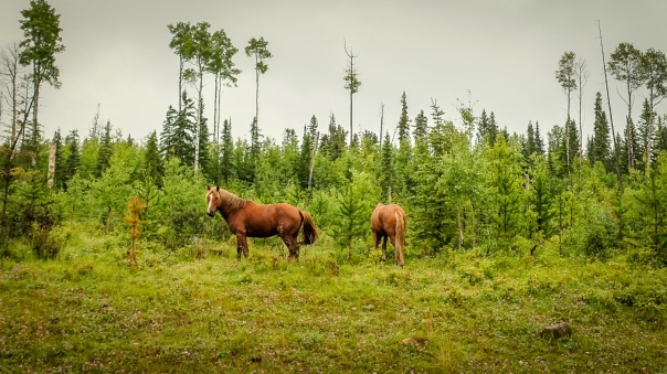 hedy bach images - wild horses - 3
