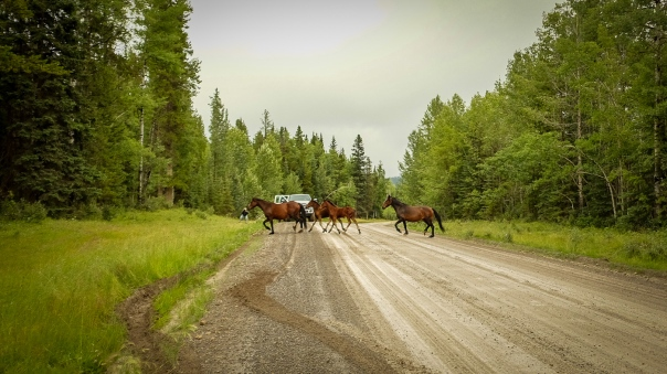 hedy bach images - wild horses - 4