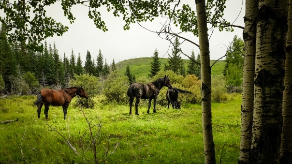 hedy bach images - wild horses - 6
