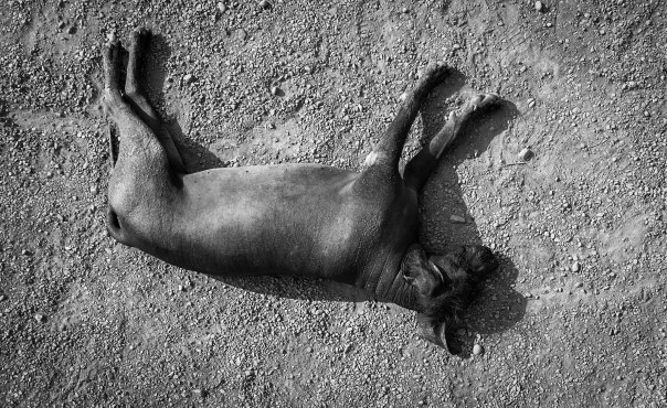 hedy bach images - dog - 2a