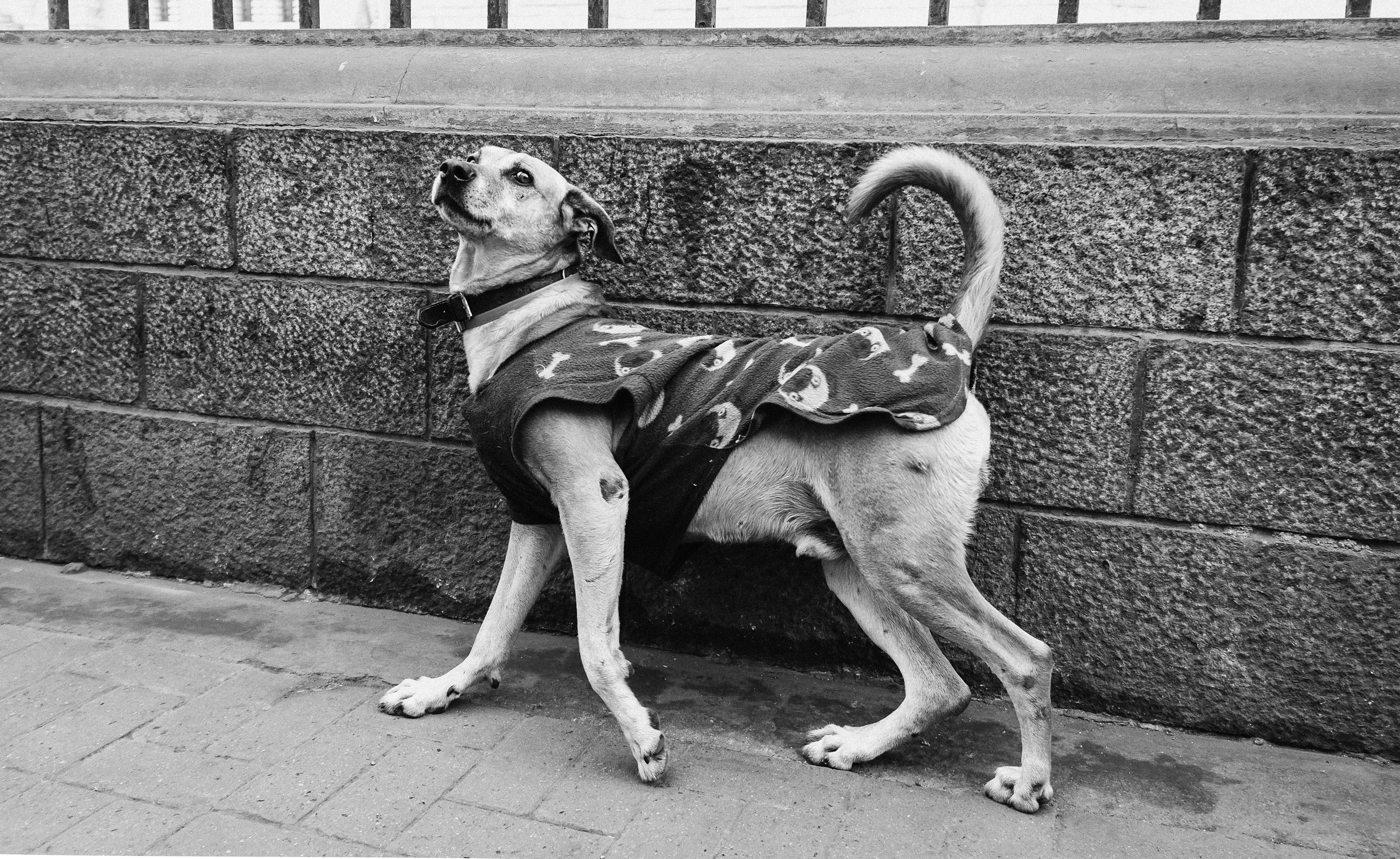 hedy bach images - dog - 4b-2