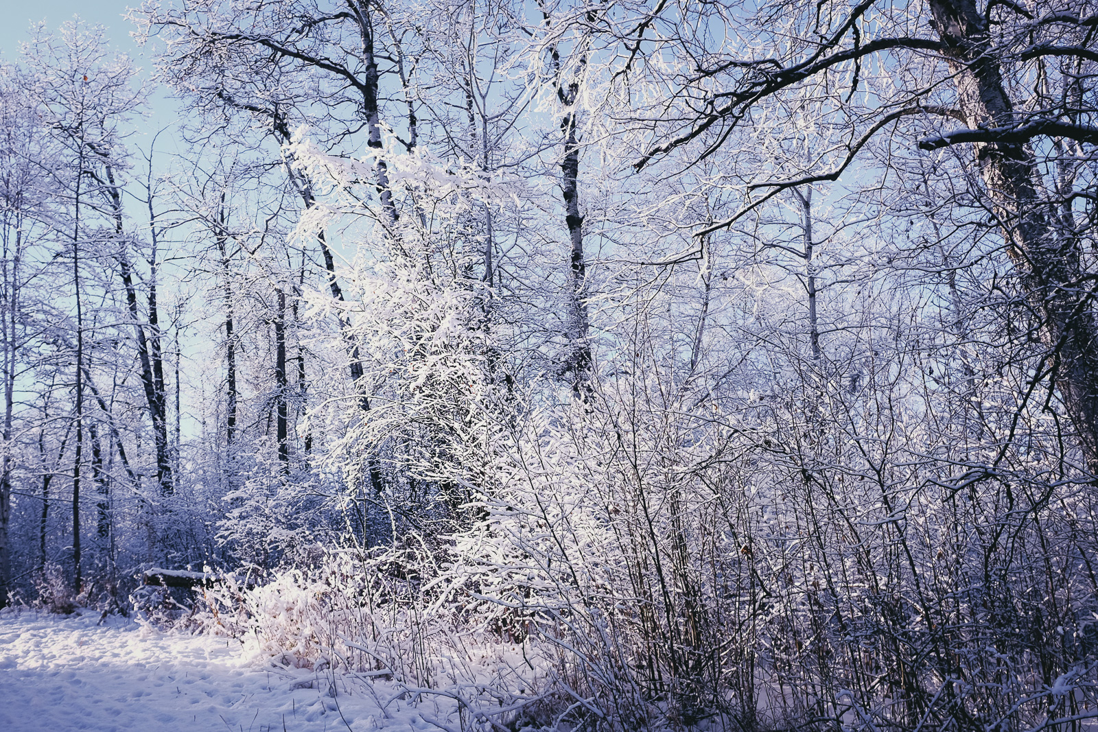 hedy bach images - blue snow - 3.jpg