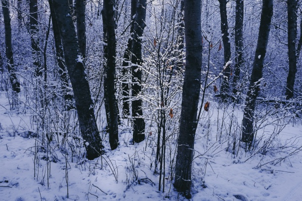 hedy bach images - blue snow - 4
