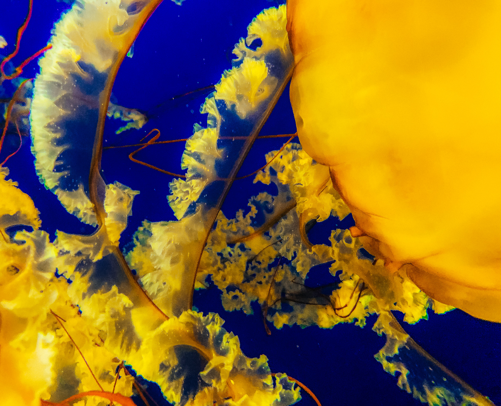 hedy bach images - jellyfish - c