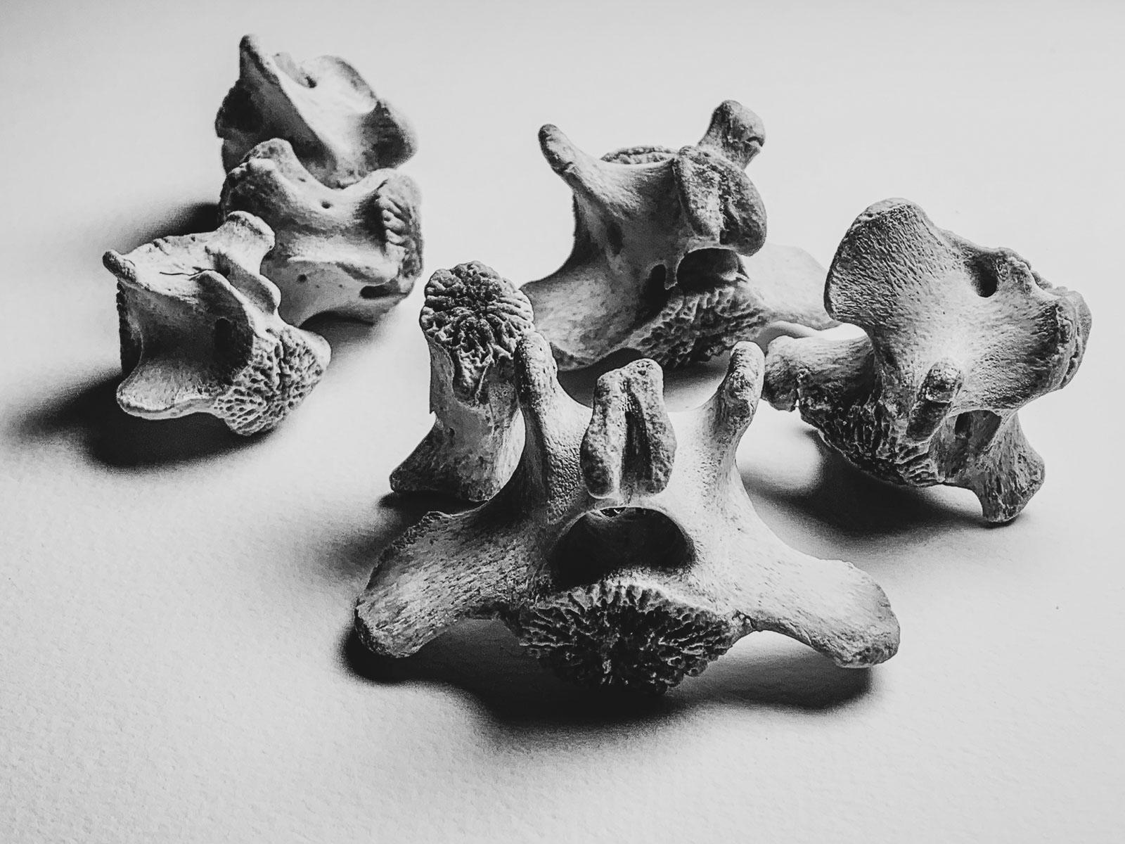 bones - 1_