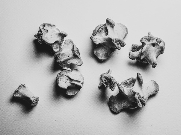 bones -2_