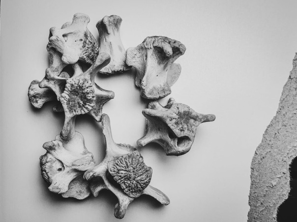 bones -3_