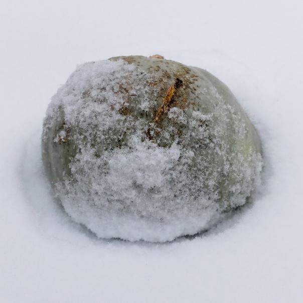 hedy bach images - winter pumpkin 1