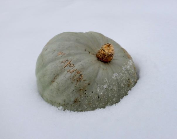 hedy bach images - winter pumpkin 3