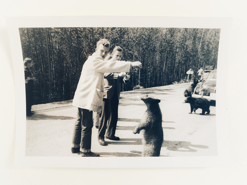 hedy bach images - bear - 4