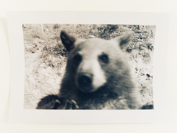 hedy bach images - bear - 5