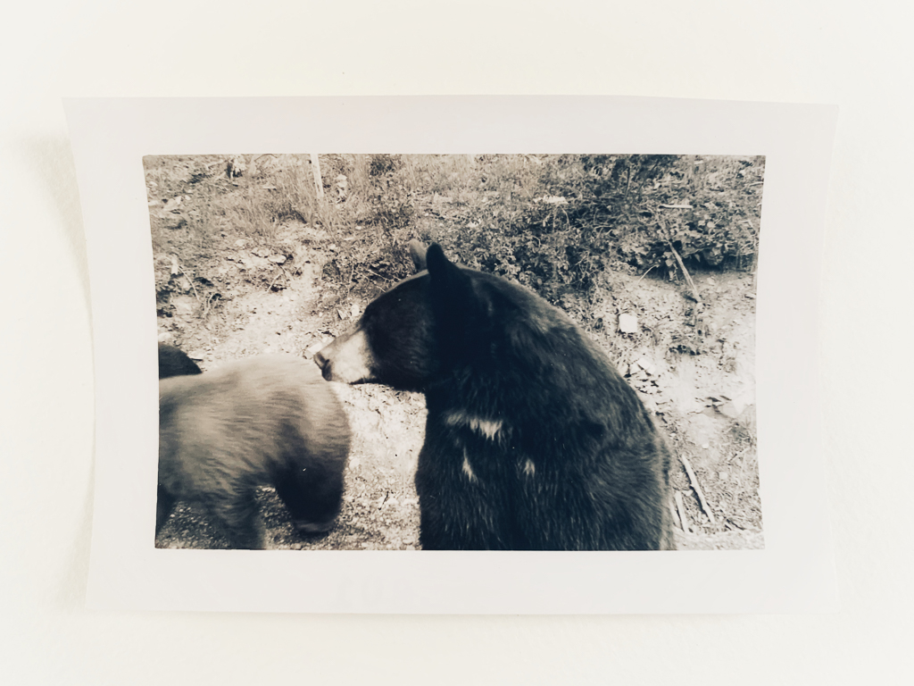 hedy bach images - bear - 8